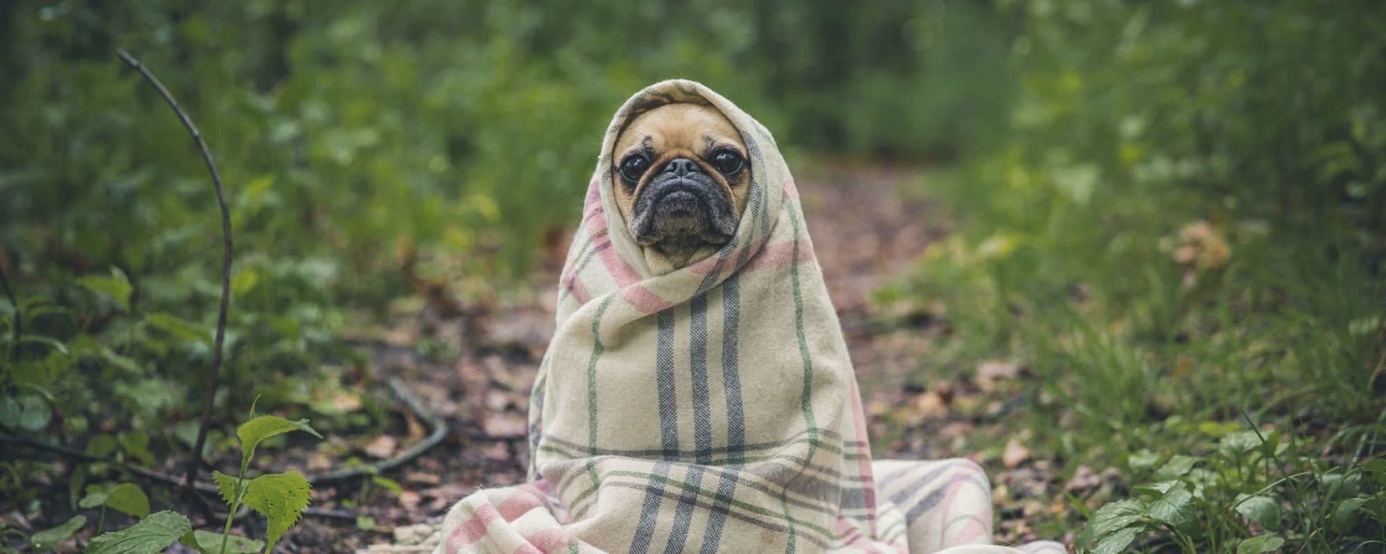 Funny pug links for your perusal & acumen.